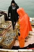 life assurance fisherman photo